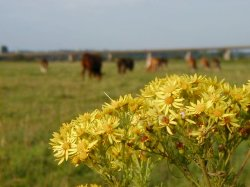 Plants and cattle share the meads